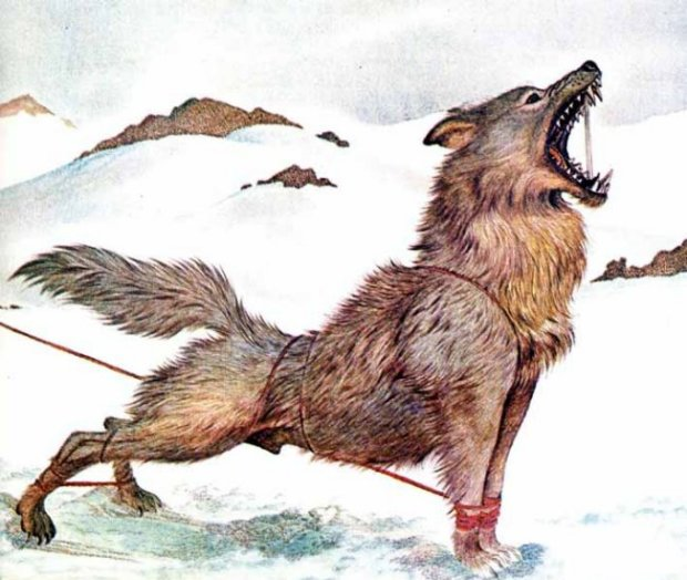 Fenrir (1978) – tranh minh họa của Giovanni Caselli
